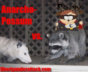 possum vs. coon